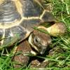 Patrycja Przełucka - Fast Tortoise Translations - rzetelnie i na czas